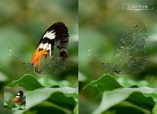 Миниатюра для Liquidum - Прозрачная живопись Photoshop Действие