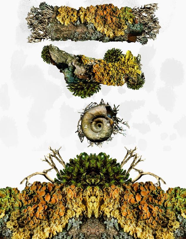 Natural Fractals and Compositions - product preview 3
