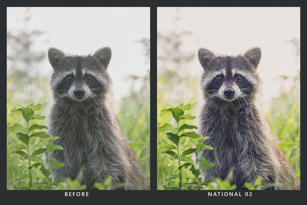 20 Wilderness Lightroom Presets & LUTs - product preview 5