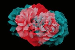 Thumbnail for Elegant Floral Brushes for Photoshop