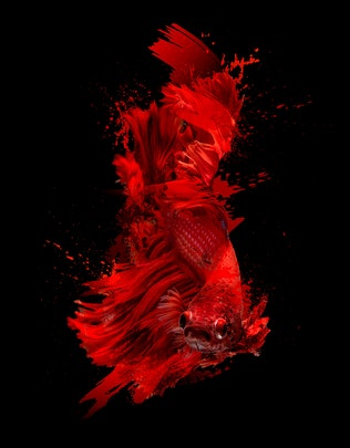 Thumbnail for 50 Stroke Splatter Photoshop Brushes Collection