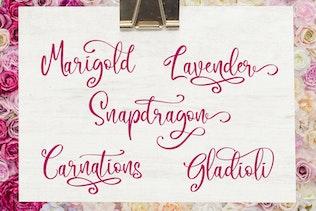 Thumbnail for Camellia Script