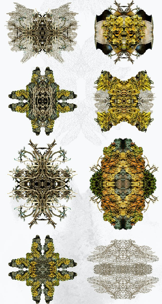 Natural Fractals and Compositions - product preview 1
