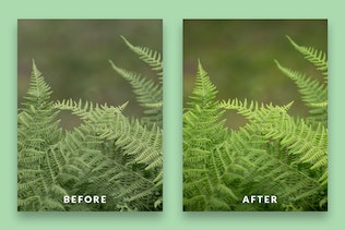 Thumbnail for Nature Lightroom Presets