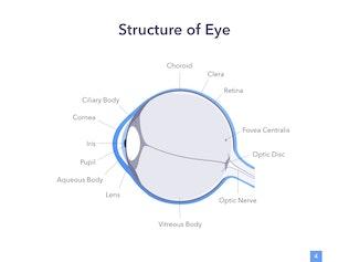 Eye Health PowerPoint Template