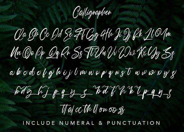 Calligrapher   Modern Script Font